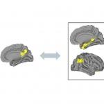 Geheugenklachten zijn gerelateerd aan hersencommunicatie
